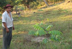 smallholder in plantation